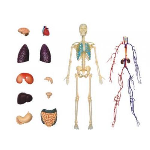 рады, анатомия для детей макет оставить свой отзыв