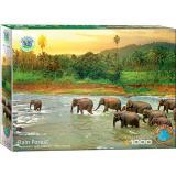 Пазл Eurographics Тропический лес. Серия Спасем нашу планету, 1000 элементов