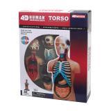 Объемная анатомическая модель 4D Master Торс человека