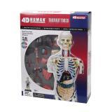 Объемная анатомическая модель 4D Master Торс человека прозрачный