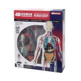 Объемная анатомическая модель 4D Master Тело человека прозрачное