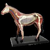 Объемная анатомическая модель Лошадь (26101)